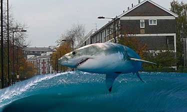 Shark jumping Wick Road